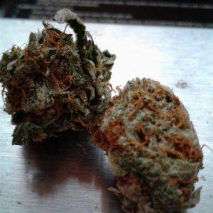 Buy Bubba Kush Marijuana Strain