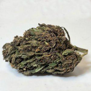 Purple Rhino online